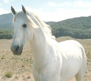 Shadowfax2