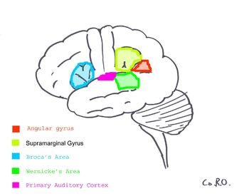 Surfacegyri