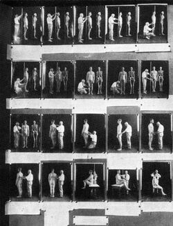 Anthropometry exhibit