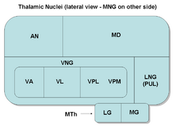 ThalamicNuclei