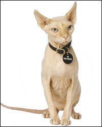 Austin Powers Cat Name