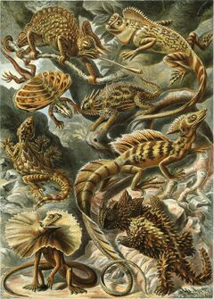 Haeckel Lacertilia