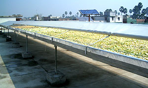 Solar tunnel dryer 2