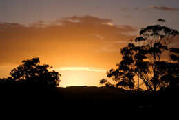 800px-Dawn - swifts creek03