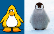 Penguin Comparison