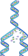 Dna-split