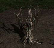 Giới thiệu quest Diablo 2 LoD Part 1 180px-Treeofinifuss