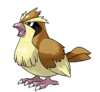Pidgey