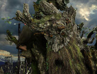 Treebeard2