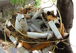 Cigarette Butt Bird Nest