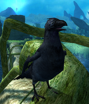 Crow Dreamfall GuardiansRealm
