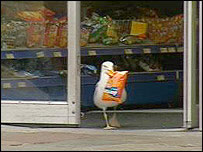 Shoplifting seagull
