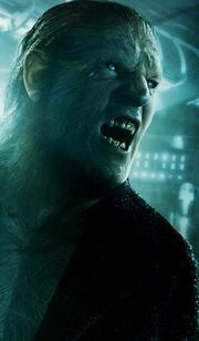 Greyback poster