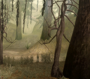 Area-Brecilian Forest