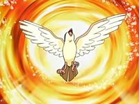 Pokemons de Kanto! EP459_Pidgeot_de_Solidad