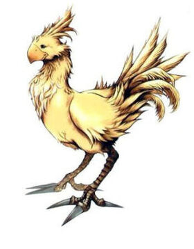 Chocobo