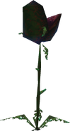 Withered Deku Baba