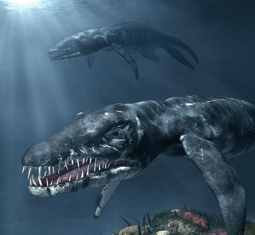 Liopleurodon - Prehistoric Wiki  Liopleurodon - ...
