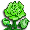 Green Rose-icon