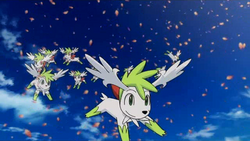 P11 Varios Shaymin en su forma cielo