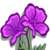 Purple Poppy-icon