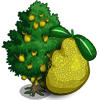 Jackfruit Tree-icon