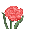 Pink Carnation-icon