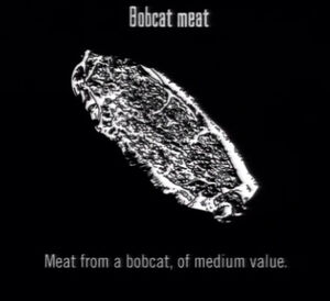 Animals Bobcat Meat