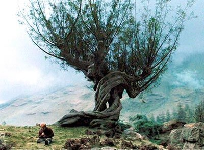 The mis-behaving Whomping Willow tree from the movie Harry Potter and the Prisoner of Azkaban - picture hosted by the Harry Potter Wiki