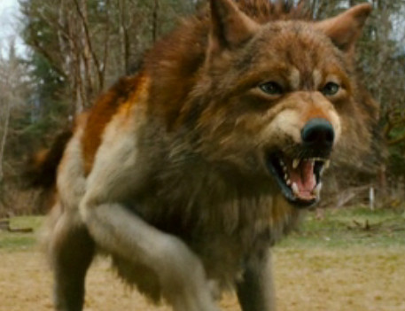 jacob black wolf