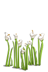Wildflowers-icon.png