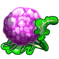 Purple Cauliflower-icon