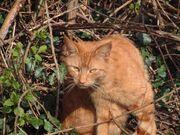 Ginger Cat.jpg