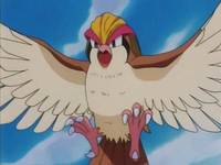 EP133 Pidgeot (5)
