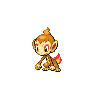 Chimchar NB