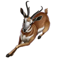Huge item pronghornantelope 1