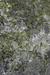 Lichen Habitat.PNG