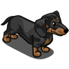 Dachshund Adult Black-icon