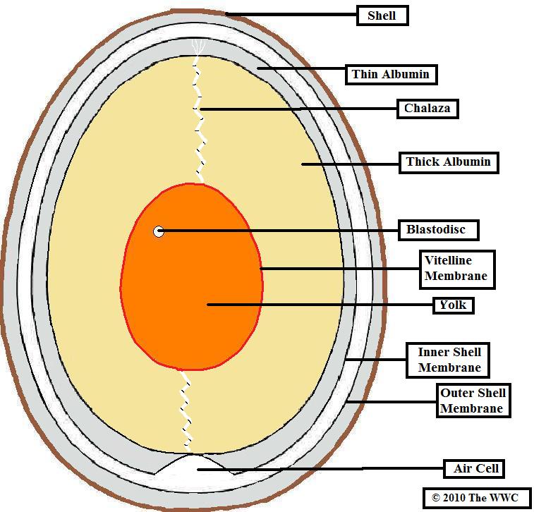 Bird Eggshell Identification