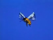 YellowBee