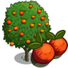 Blood Orange Tree-icon