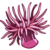 SeaCreatures Anemone-icon