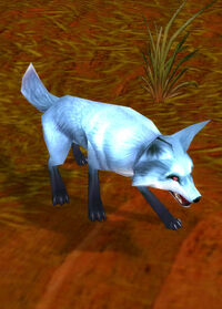 Highlands fox