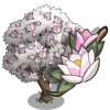 Magnolia Tree (tree)-icon