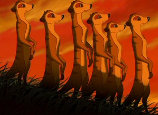 meerkats   the lion king