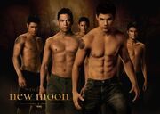 New-moon-wolf-pack-wallpaper-jacob-black-1024x730