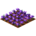 Purple daisies.png