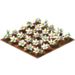 Blanco daisies.png