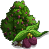California Laurel Tree-icon