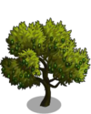 Lucques Olive Tree2-icon